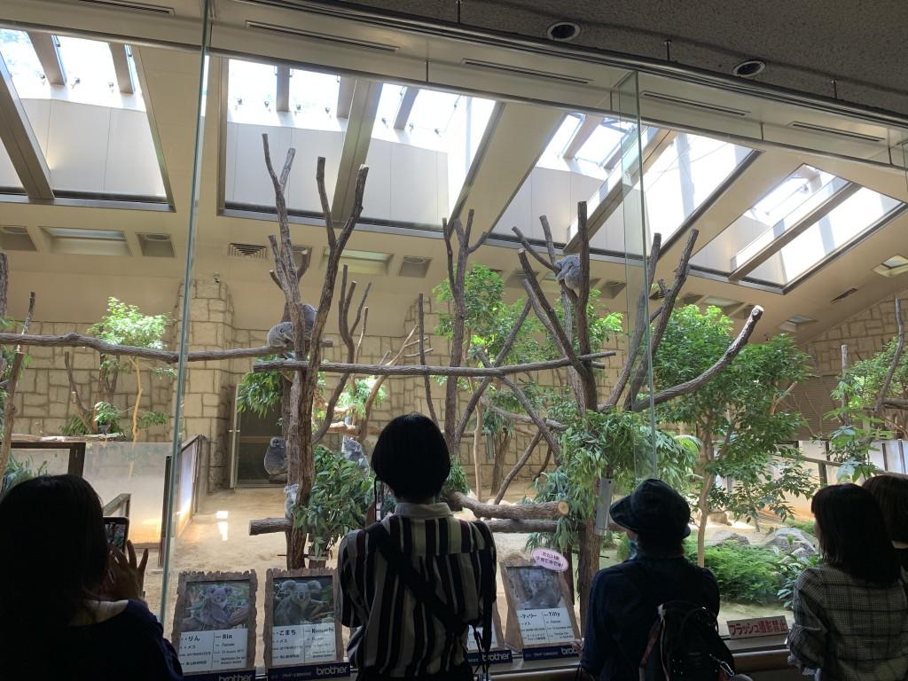 【外出】東山動物園 (3)